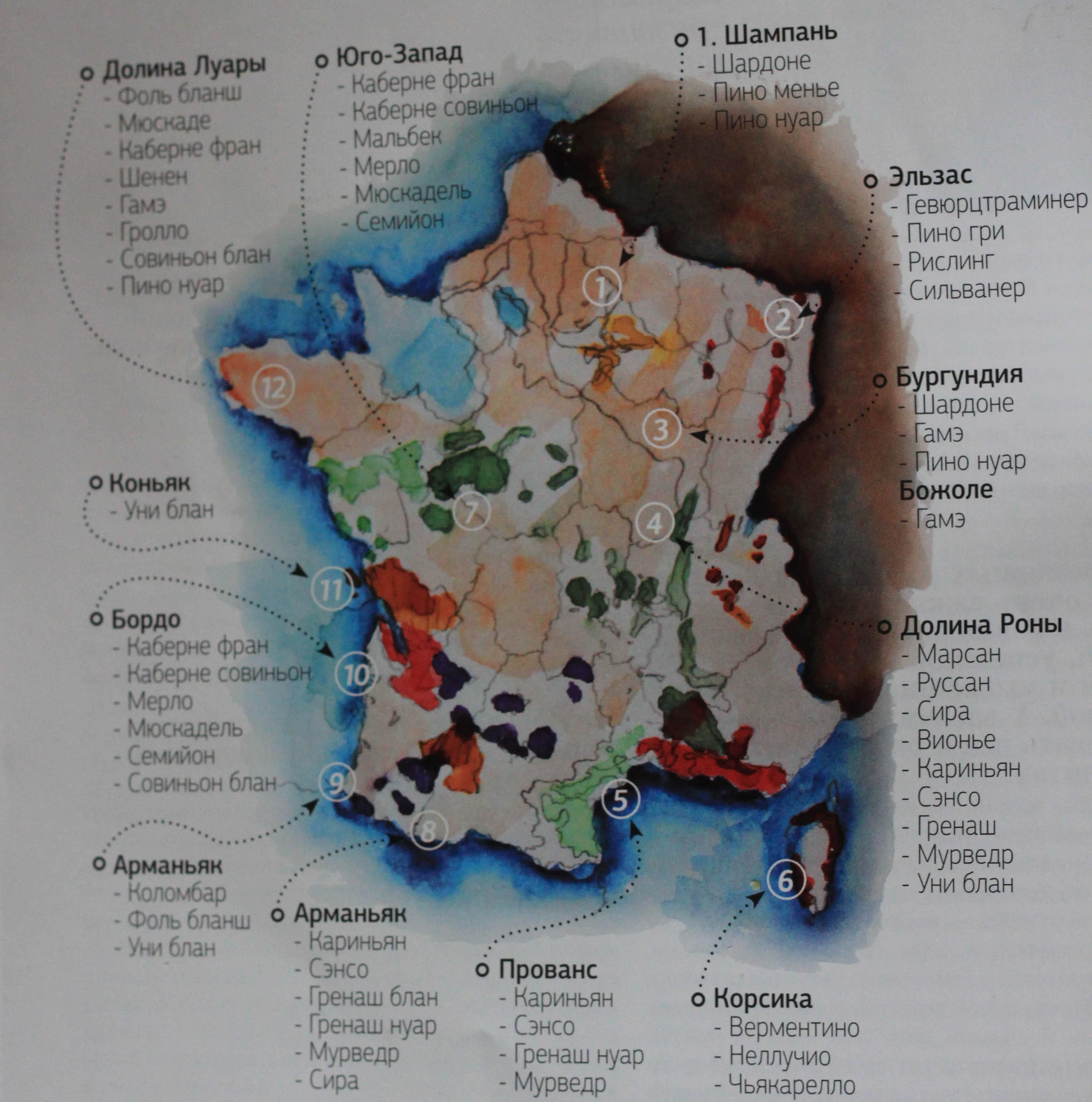 вкусные сорта винограда Франции