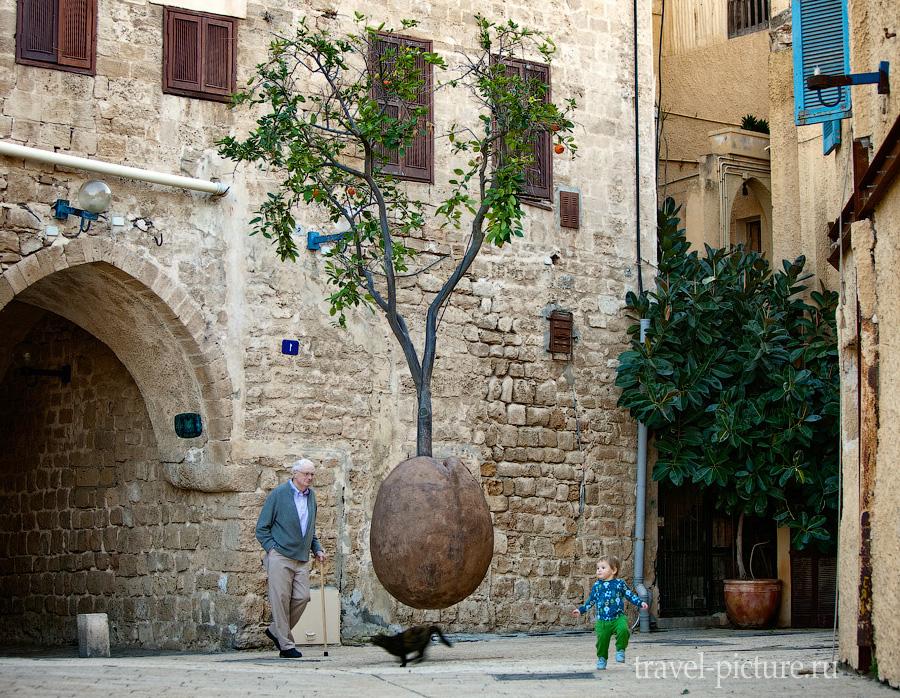 Апельсиновое дерево в городе Яффа