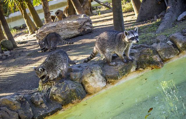 национальный парк шкарет