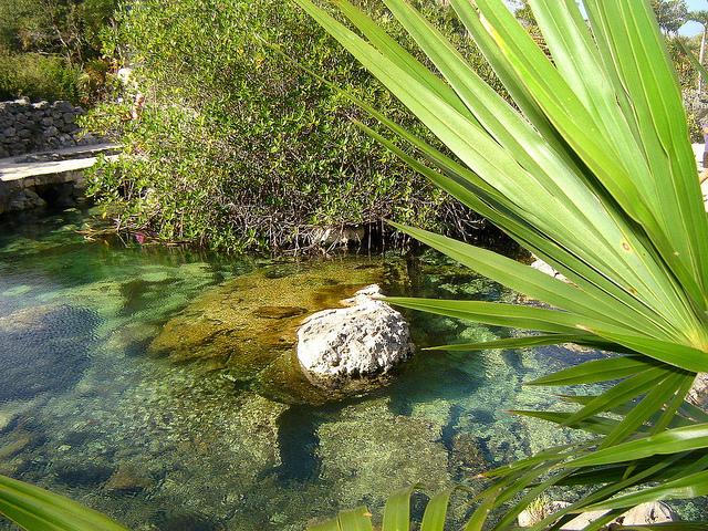 черепахи на Ривьера - майя