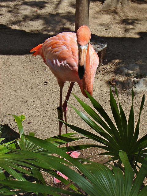 что посмотреть в мексике, розовый фламинго