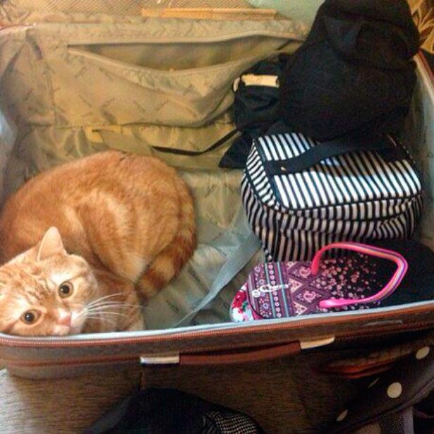 Что взять с собой в отпуск с котом