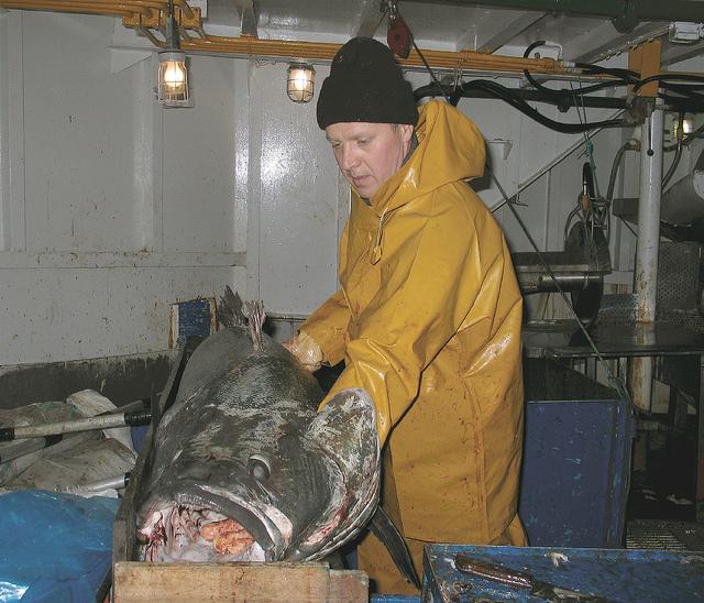 Приготовление рыбы Клыкач