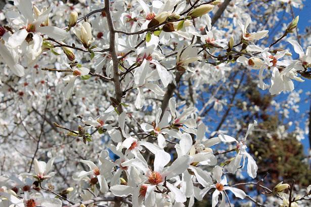 Где провести майские праздники куда