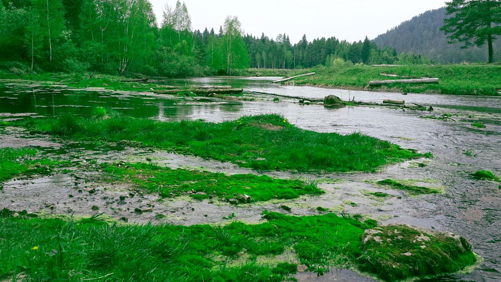 Сказочная река в детском лагере Лукоморье
