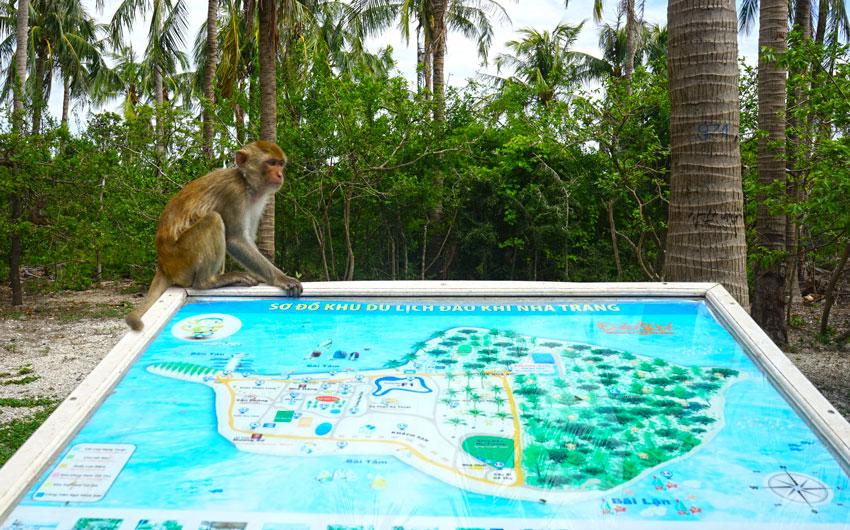 карта острова обезьян