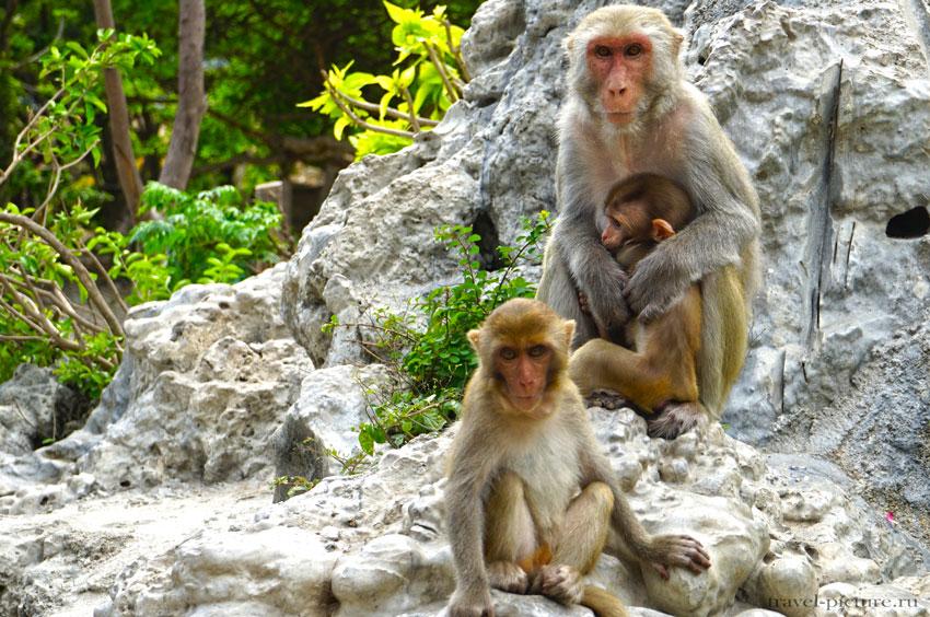 Остров обезьян во Вьетнаме или остров Няфу - одна из экскурсий Вьетнама