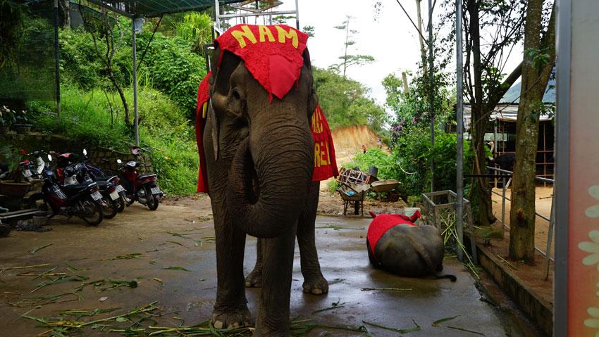 Покататься на слонах в парке Пренн Далат