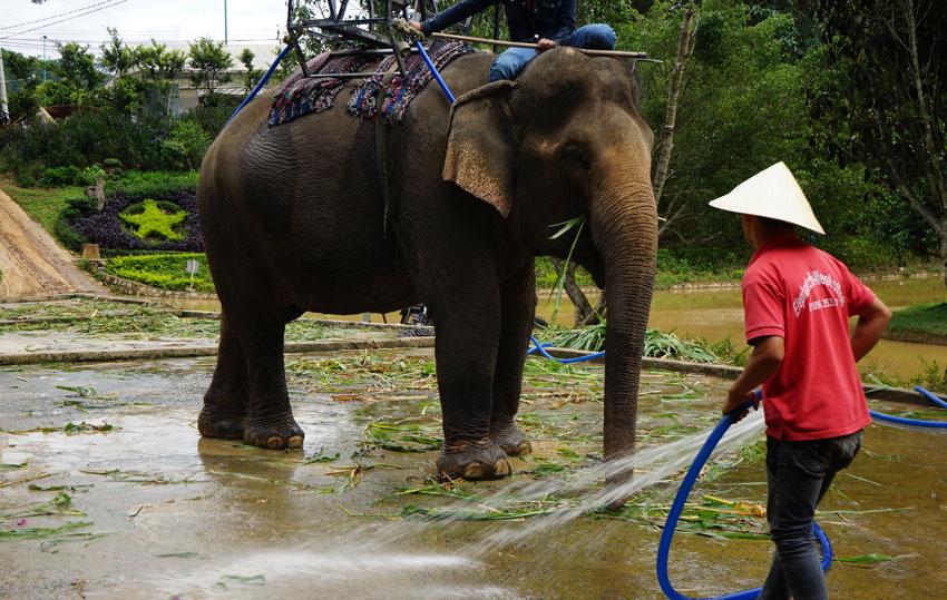 слоны в далате