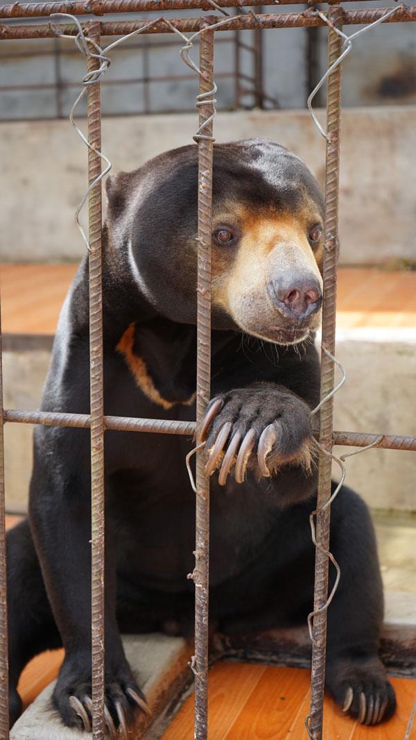 медведи в парке Пренн
