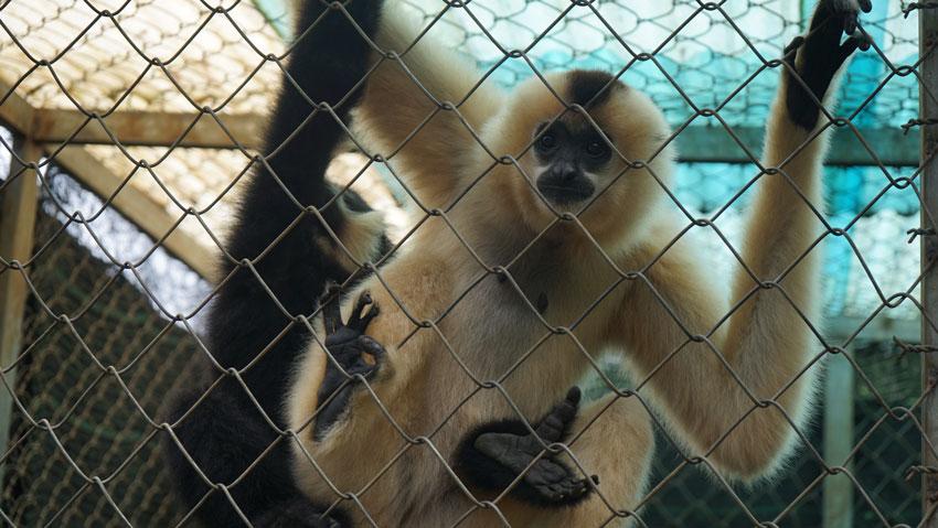 зоопарк в парке Пренн