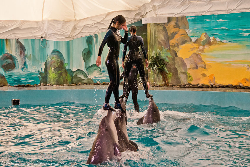 Дельфинарии Сочи - 'Ривьера' и 'Акватория'