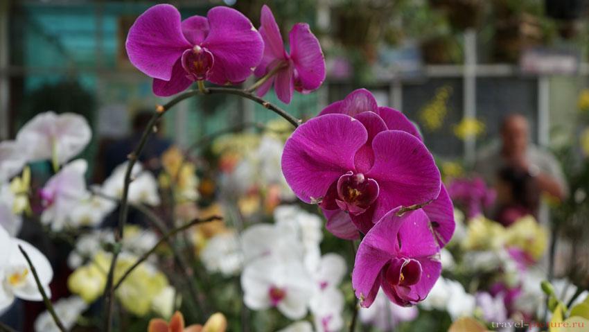 Орхидеи в далате