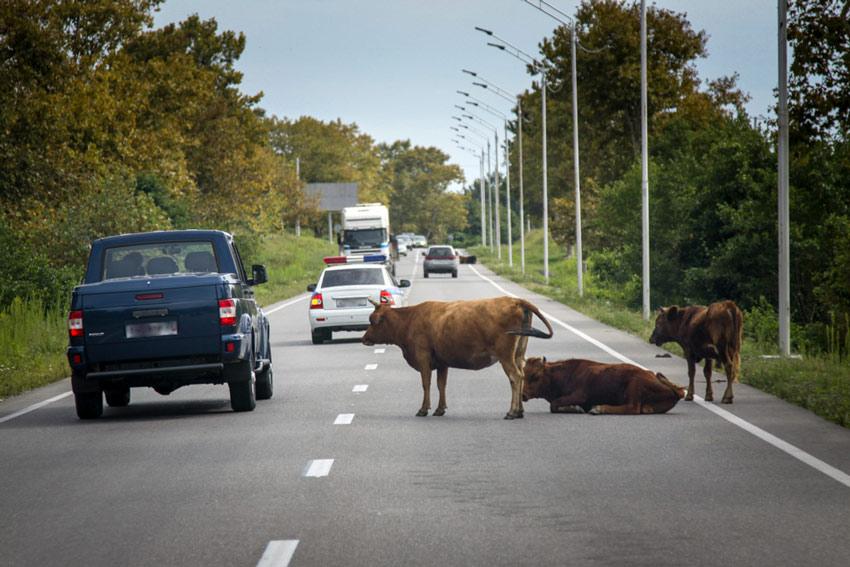 доехать до Абхазии на машине