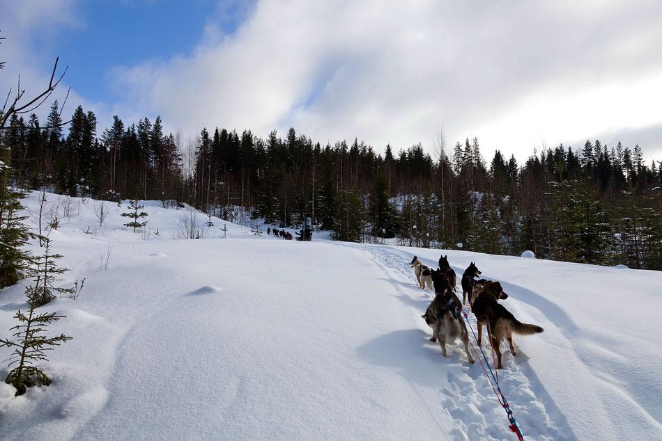отдых в Карелии зимой на новый год