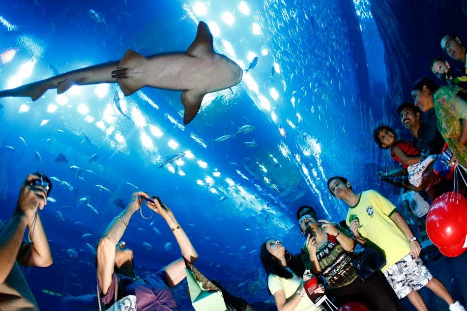 экскурсия и развлечения в Абу-Даби
