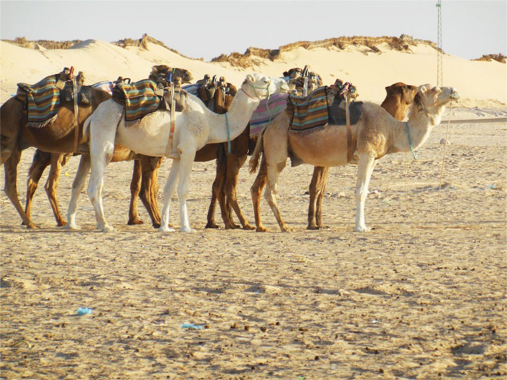 Цены на отдых в Тунисе