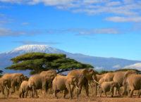 Путевки в Кению в Момбаса, цены
