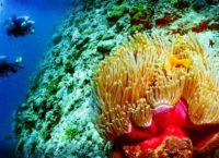 стоимость путевок на Мальдивские острова
