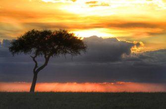 Где в Кении лучше отдыхать