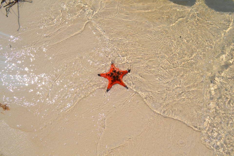 Пляжи Фукуока, где есть морские звезды