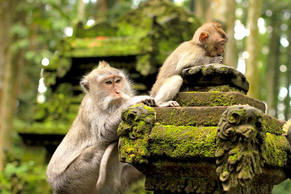 животный мир Индонезии