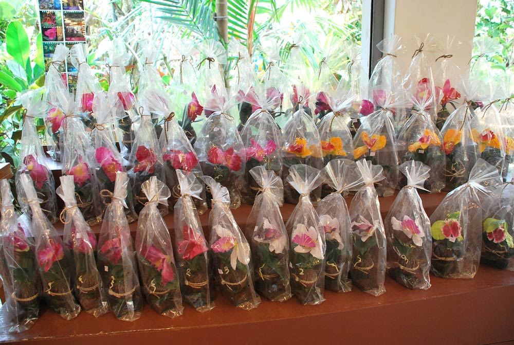 цветы на Пхукете