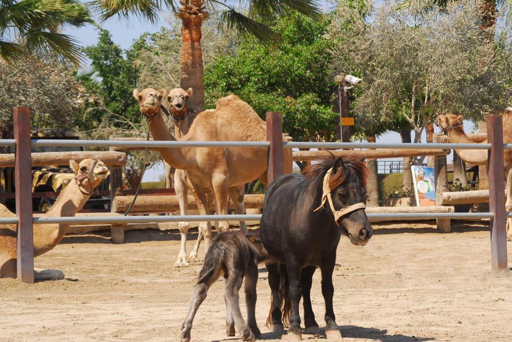 куда съездить на Кипре с детьми