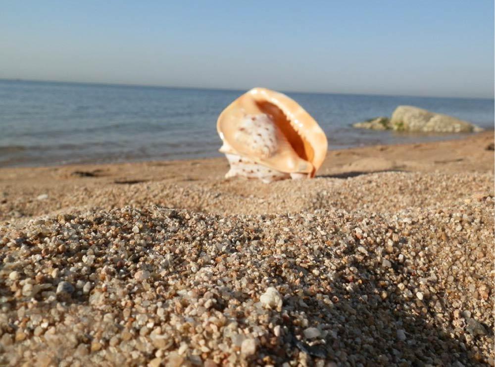 пляж в Бэйдайхэ