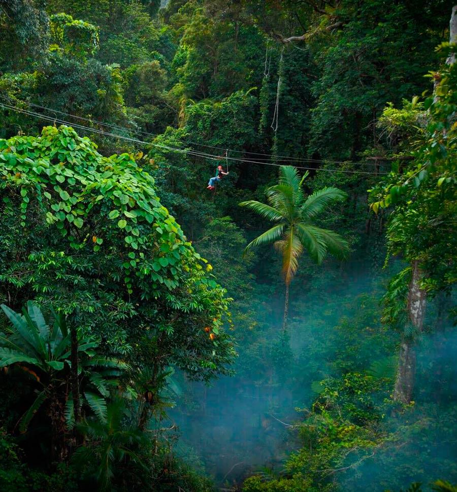 Леса Тасмании