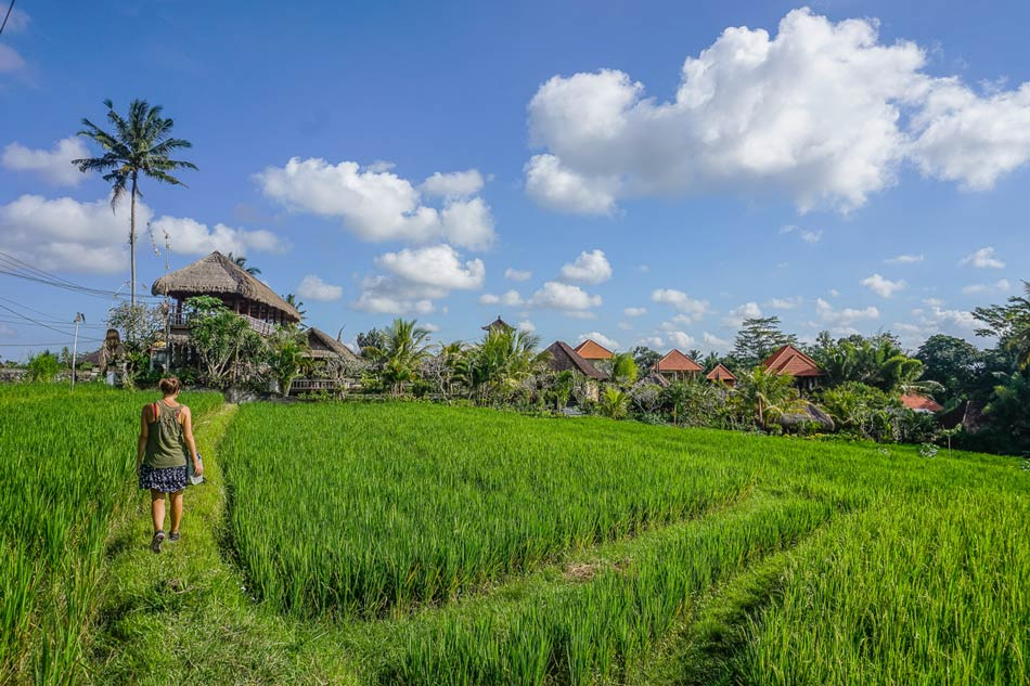 Ubud Kajeng Rice Fields Walk