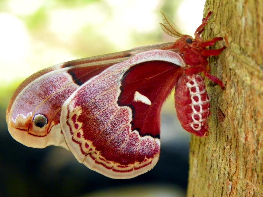 Заповедник бабочек