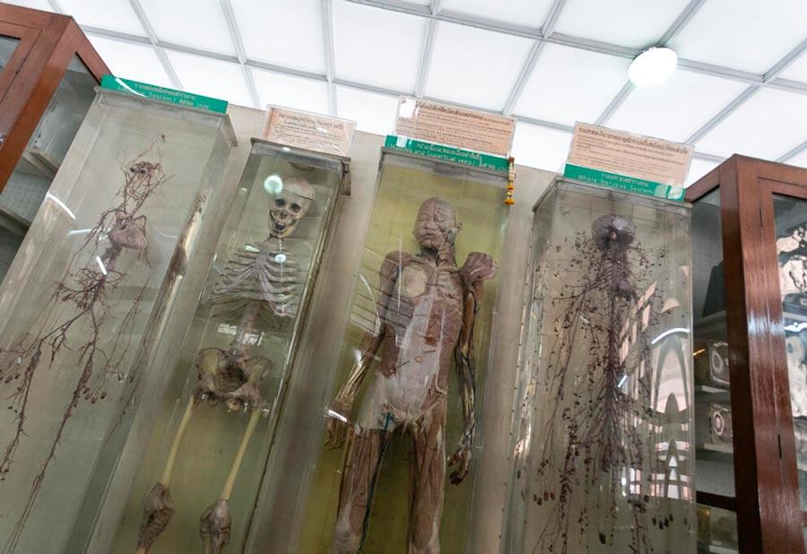 Медицинский музей