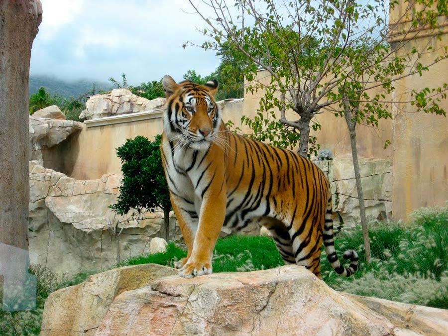зоопарк Натура