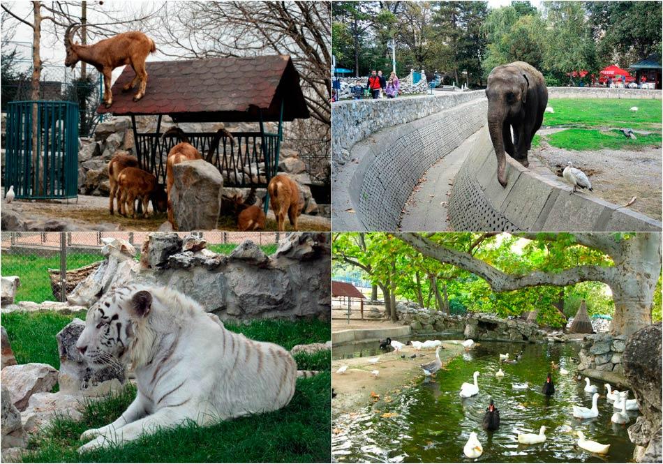 Сербский зоопарк