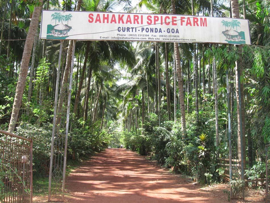 Плантация специй в Сахакари