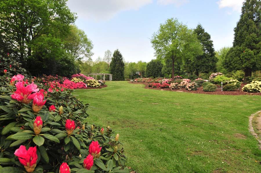 Парк рододендронов
